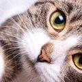 猫の鼻がいつも濡れているのは「健康な証拠」?