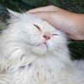 猫を触る場所!喜ぶ所、嫌な所