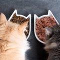 猫が安心して食事ができる『理想の食器』3選