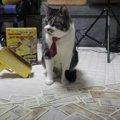 今だけ成金気分?!お金ばらまきマシーンで猫ちゃんと遊ぶ