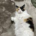 猫の『爪切り』で絶対注意すべき3つのポイント