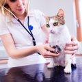 猫が乳腺腫瘍になる原因と症状、早期発見する予防法まで