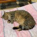猫の快適な寝床を作る方法5つ