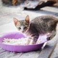猫が食べ過ぎる時の対策、正しい餌の与え方