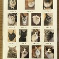猫たちの幸せを考え閉店を決意!catwalk(キャットウォーク)大宮が残して…