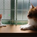 ネズミ捕りの罠にはまった子猫「ニケ」を引き取るまでとそれから