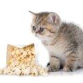 猫にポップコーンを食させべても大丈夫?注意する事