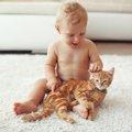 新生児と猫が同居する際に気を付けなければならない事