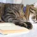 猫好きにおススメしたい「猫マンガ8選」