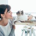猫のヘルニアの種類別の症状とその原因