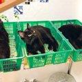 出荷待ち?黒猫さん達のカゴ盛りっぷりが凄いと話題!