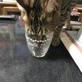 猫が炭酸水を飲んでも大丈夫?