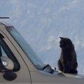 猫が車に酔った時の症状とその対策とは