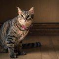 猫の値段と飼う時の初期費用や飼育費、医療費など