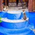猫にたくさん会える♡世界の美しい街4選