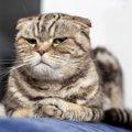 猫が軽蔑している時にする仕草5つ