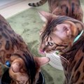 モーニングルーティーン♡7匹の猫ちゃんたちを見てみましょう!