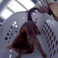 洗濯中の楽しみ!猫ちゃん専用ジェットコースター