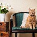 猫用の椅子選び方やおすすめ商品