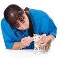 猫の目やにの取り方とその際の注意点