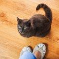猫がじーっと見つめてくるのはなぜ?