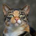 猫の避妊手術は必要?費用や方法、メリットやデメリットまで