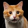 猫のひげ袋の役割りについて