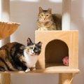 人を信用できなかった姉妹猫が甘えん坊に。感動の大変身!