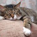 猫が10歳を過ぎて現れる老化のサインと必要なケア