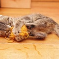 猫が蹴る5つの理由と止めさせる方法