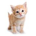 猫の赤ちゃんの育て方と成長の過程とは