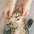 猫の乳腺腫瘍とは 原因と主な症状