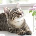 猫の臭いの原因とその対策方法について