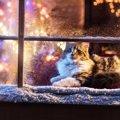 冬の猫の寒さ対策!お留守番時ストーブに頼らず安心の防寒DIY紹介