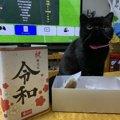 「令和」の時代、猫とはどう暮らす?新年号から決めておきたい新しい…