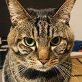 日本にいる「和猫」ってどんな猫?その特徴とは