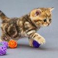 子猫のおもちゃ人気ランキング!全国の飼い主が選んだ人気トップ5♪