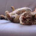 猫もクーラー病にかかる?使用する時気をつけること