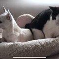 お尻とお尻でお知り合い?!互いにオシリで挨拶し合う犬と猫