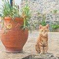 猫好き過ぎあるある「何でもネコに見える」現象