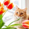 猫の命をおびやかす危険な『春の草花』5選!食べたら深刻な中毒症状…