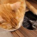 しっぽで叩かれ続けた猫ちゃんの逆襲