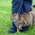 猫のスリスリがいつもより激しいのは何故?8つの心理