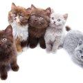 猫の血液型による性格の違いとは?種類の割合と輸血の方法