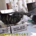 購入した物の検品に参加した猫ちゃん、途中で可愛いハプニング発生!
