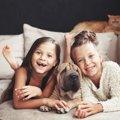 犬は人に付く、猫は家に付く…これって本当?