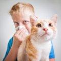 猫アレルギーを突然発症した!その原因と対策とは