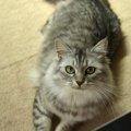 猫がほふく前進する3つの理由