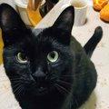 『あ〜そろそろ眠いにゃ〜…』全力でアピールする黒猫さん♡