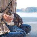 オス猫の特徴や飼育の際の注意点